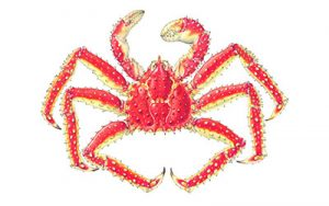 king crab small